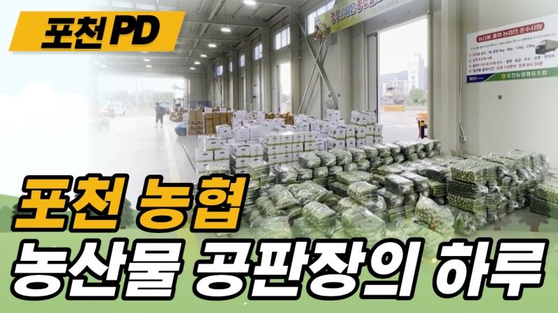 [포천PD가 떴다] 포천농협 농산물 공판장의 하루